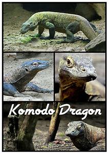 KOMODO DRAGON - SOUVENIR NOVELTY FRIDGE MAGNET / ANIMALS / WILDLIFE / NEW / GIFT