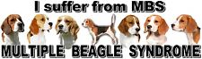 """""""I Suffer from MULTIPLE  BEAGLE  SYNDROME"""" Dog Car Sticker by Starprint"""