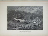 1903 Naturale Storia Stampa Tuono Illuminante Tropics Africa