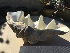 """36"""" Diameter Giant Clam (Tridacna Gigas) Quality Reproduction"""
