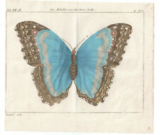 1774 Friedrich Martini Natural History plate 208 Hand-coloured