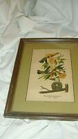 Vintage Picture - Ruby Throated Hummingbird  Plate #36 Framed And Matted