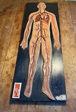 AN ORIGINAL VINTAGE MEDICAL SCIENTIFIC MODEL OF HUMAN BLOOD CIRCULATION 1955