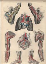Stampa antica ANATOMIA BRACCIA GAMBE PIEDI medicina 1844 Old antique print