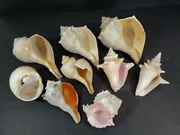 Mix Lot 9 pieces Natural Conch Horned Sea Shell Pink Nautical Beach Ocean Decor