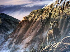 """"""" Pay Off """" -  Big Horn Ram Print by John McFaul - Signed & Numbered"""