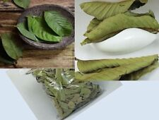 fresh Dried Guava Leaves 25g - anti-bacteria Relieve Natural Shrimps food