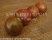 🔥 🍅 GUERNSEY ISLAND Tomate Topf-Tomate 10 Samen SEHR SELTEN Tomaten für Balkon