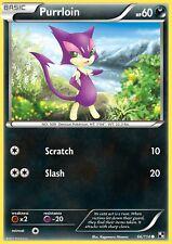 Reverse PURRLOIN 66/114 Pokemon Card  MINT x2 TWO CARDS Basic