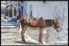 585011 Donkey Fira Santorini Greece A4 Photo Print