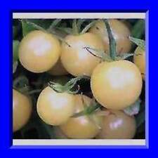 Super Snow White Cherry Tomato Seeds! Comb. S/H See our store!