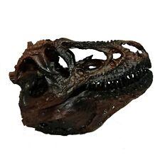 Tyrannosaurus T-Rex Dinosaur Skull Resin Replica Fossil Model Fossil Brown