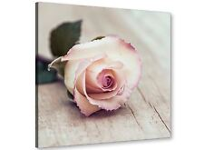 Vintage Shabby Chic French Rose - Cream  Canvas Modern 49cm Square - 1s278s