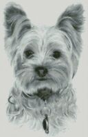 Cross Stitch Chart - Kit Yorkshire Terrier Dog