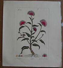 Dan Mitra Wild Aster Hand-Colored Etched Limited Edition Fine Art Print Realism
