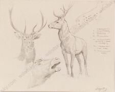 """Ferdinand Karl Gold (b.1882) """"Deer Studies"""", Drawing, Early 20th Century"""