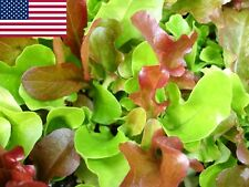 Mesclun Lettuce Seeds- 1,000+  2018 Seeds            Max. Shipping $1.69/order
