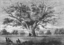 Hainault Forest And Aldborough Hatch. Fairlop Oak, 1800 1888 old antique print