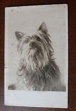 Vintage Dog Postcard- The Skye Terrier- C W Faulkner- Posted 1906