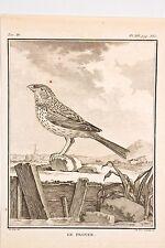 Histoire Naturelle Oiseaux Buffon v 1780 par Tardieu-De Sève  Le PROYER