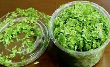 3 Cups of 5000+ Floating Duckweed Live Organic Aquarium Snail Free