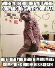 "Funny Cat  refrigerator magnet 3 1/2 x 4 1/2"""