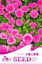 Original Package 50 Dwarf Kingfisher Seeds Callistephus Chinensis Flowers A203