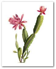 CACTUS stampa, botanico TREVALLY succulenta ART, 8 x 10 pollici, senza cornice