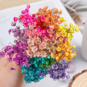 30pcs Vivid Mini Daisy Small Star Dried Flowers Floral Bouquets Natural Plants☆