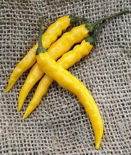 Yellow Bedder Macedonian Heirloom Pepper Premium Seed Packet