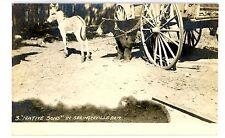 Springerville AZ -CAPTIVE BEAR & BABY DONKEY- RPPC Postcard Arizona/Chained