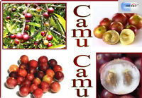 DR T&T camu camu extract powder 20% vit C