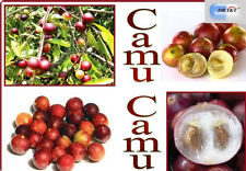 Poudre D'Extrait De Camu Camu 20% vitamine C