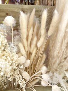 20 x Rabbit Tail Grass Bunny Tails Dried Flowers Lagurus Ovatus Plant Stems UK