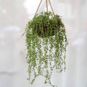 Artificial Succulent Plant Vines Flower Hanging Rattan Room Party Decor Hot
