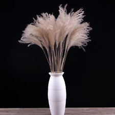 100Pcs/Set Natural Dried Pampas Grass Reed Home Wedding Flower Bunch Decor