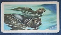 FUR SEAL    Vintage Colour Card   VGC