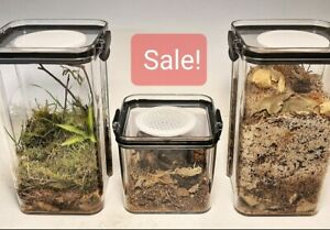 Insect Enclosures - Acrylic Terrariums - Scorpions Tarantula Small