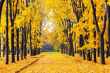 STUNNING AUTUMN PARK LANDSCAPE CANVAS #389 WALL HANGING PICTURE ART A1