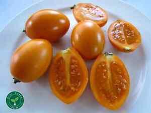 20 seeds of Tamarillo Orange SOLANUM BETACEUM - Tomato Tree + 5 seeds Sunflower