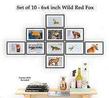 Red Fox Prints Set of 10 6x4 wildlife Photo Picture Prints ONLY Wall Decor Art