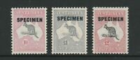 KANGAROO C OF A WATERMARK HIGH VALUE SPECIMEN SET VERY RARE ONLY 10000 SETS