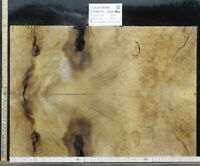 Tonewood Euro Ahorn Riegel Maple 50x18x 0,70 cm Aufleimer Guitar Tonholz Droptop