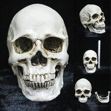 Resin Human Lifelike Skull Model Skeleton Head Halloween Party Ornament Statue