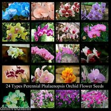 24 Types Perennial Phalaenopsis Orchid Seeds 100PCS Rare Rare Butterfly Fower