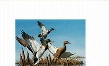 MINNESOTA #1 1977 DUCK STAMP PRINT MALLARDS by David Maass, + 2 stamps