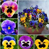 100Pcs Wavy Viola Flower Seeds Rare 6 Kind Bonsai Tricolor For Home And Garden