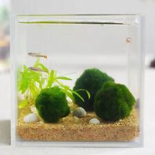 2018 Fish Tank Decor Marimo Moss Balls 1.2inch Cladophora Live Plant Aquarium