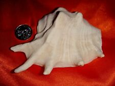 Vintage Unknown Sea Shell, Collectible Item, Super Bargain Sale