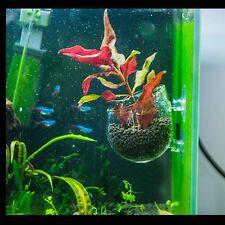 Clear Aquarium Fish Tank Aquatic Crystal Glass Pot Plant Cup Holder Two Sucker